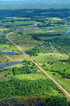 The Amazon rainforest near Manaus.