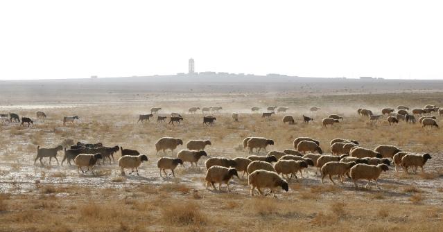 Parched land in eastern Syria, November 2010. Khaled Al Hariri/Reuters